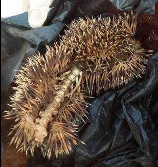 yup, a hedgehog skin?